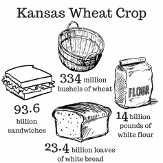 The Kansas wheat crop can produce 23.4 billion loaves of white bread.