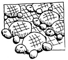Image: Shaping Tortoises.